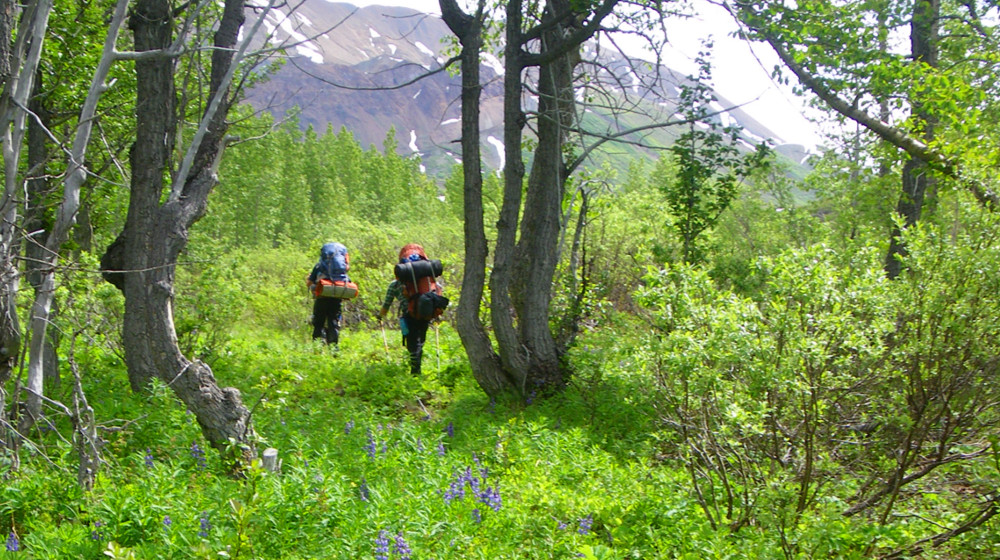 Alpine meadows are full of colorful wildflowers, especially in mid-summer