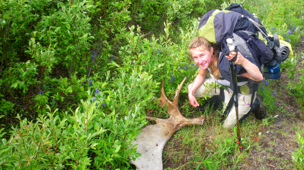 Abundant wildlife such as sheep, mountain goats, moose and bear can be spotting throughout this trip