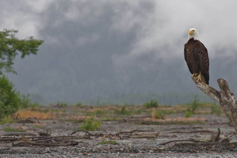 Visit the valley of the eagles, Haines, AK